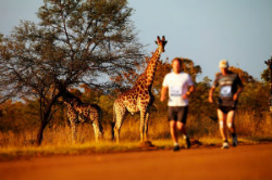 big 5 marathon newsletter photo-622